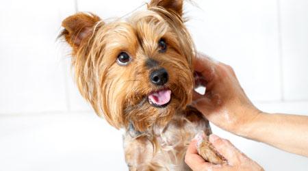 expert-pet-care